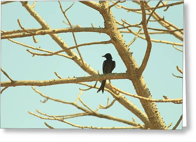 Cuckoo Greeting Card