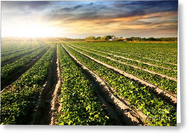 Agricultural Greeting Cards - Cultivated Land Greeting Card by Carlos Caetano