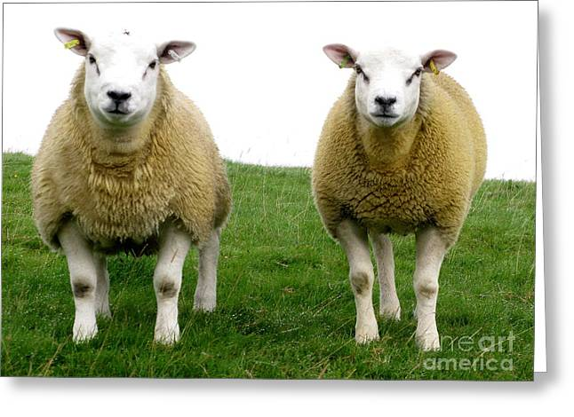Cumbrian Sheep Greeting Card by Ruth Hallam