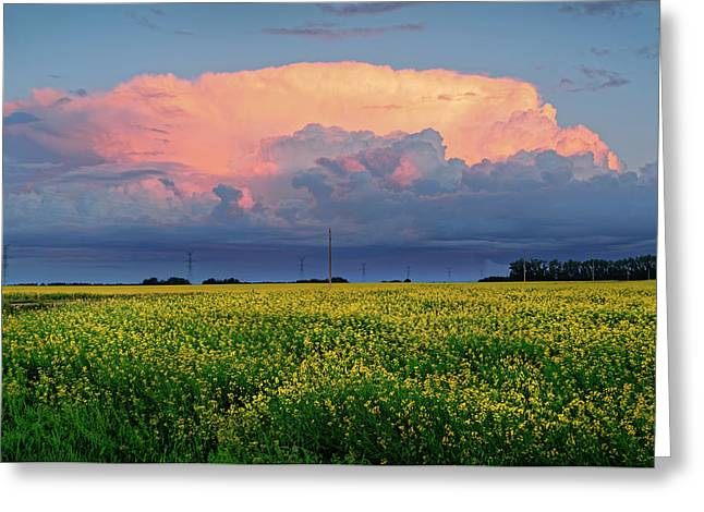 Cumulus And Canola Greeting Card