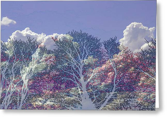Greeting Card featuring the photograph Cumulus And Trees by Nareeta Martin