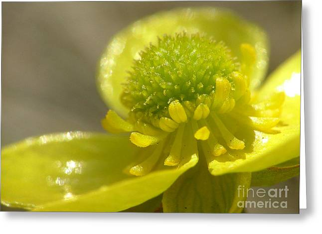 Cup O' Sunshine Greeting Card by Katie LaSalle-Lowery