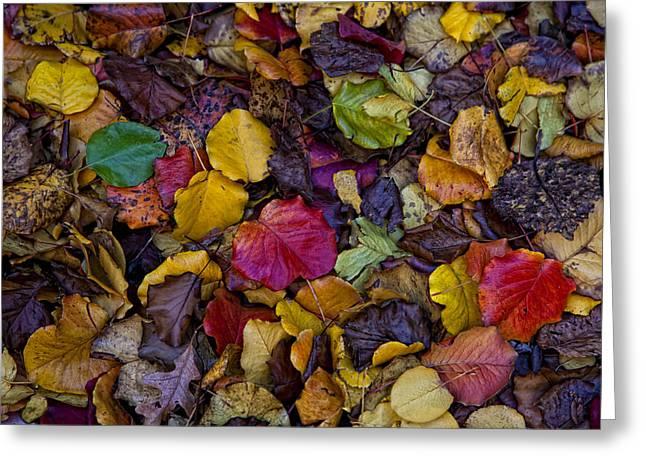 Curbside Leaf Litter Greeting Card by Robert Ullmann