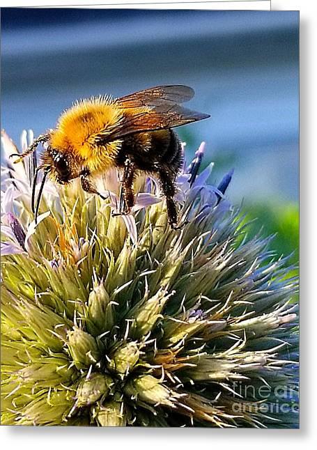Curious Bee Greeting Card