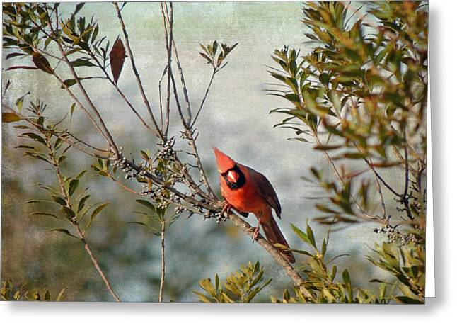Curious Cardinal Greeting Card