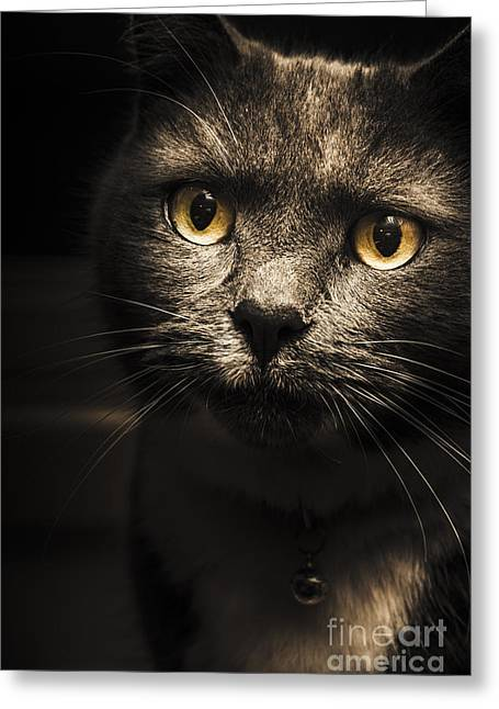 Curious Cat Watching From The Shadows Greeting Card