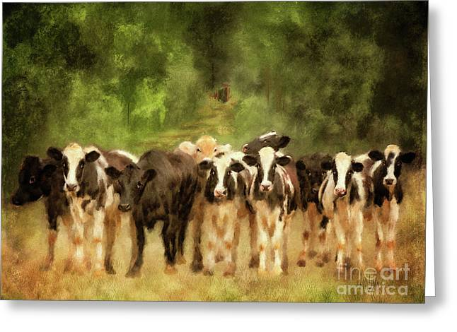 Curious Cows Greeting Card