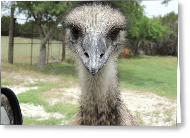 Curious Emu At Fossil Rim Greeting Card