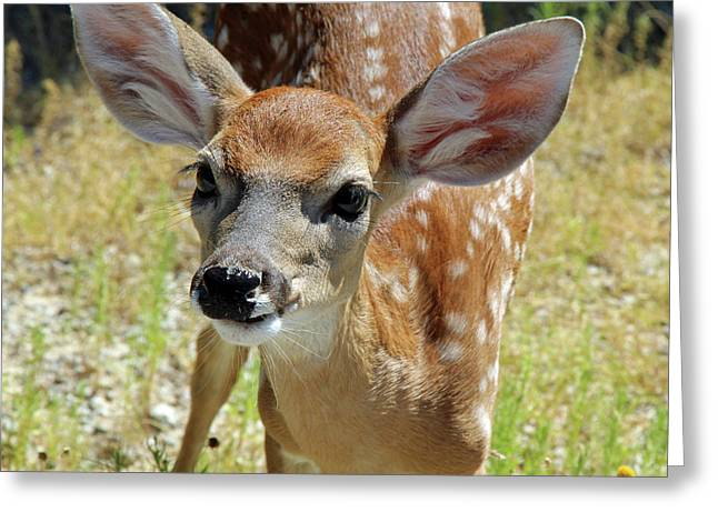 Curious Fawn Greeting Card