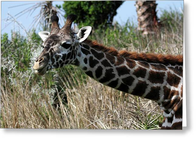 Curious Giraffe Greeting Card