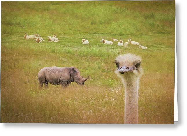 Curious Ostrich And White Rhino Greeting Card