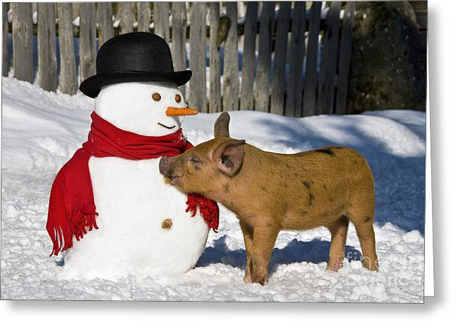 Curious Piglet And Snowman Greeting Card by Jean-Louis Klein & Marie-Luce Hubert