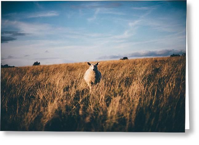 Curious Sheep Greeting Card by Ashley Jarman