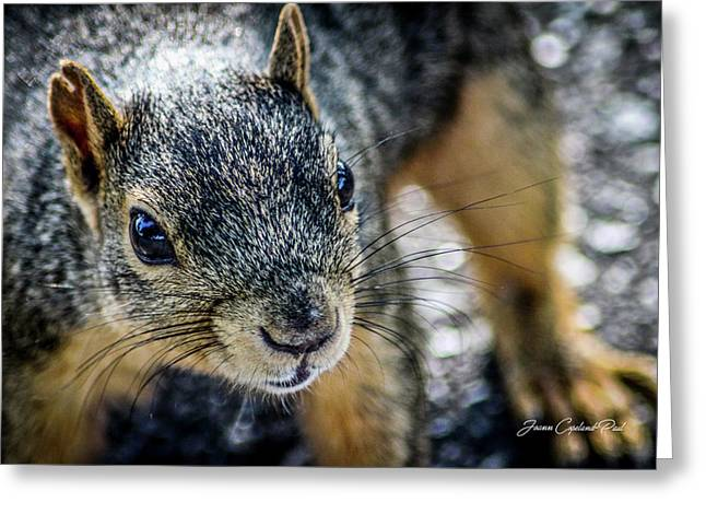Greeting Card featuring the photograph Curious Squirrel by Joann Copeland-Paul