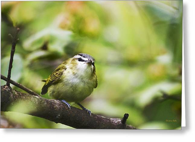 Curious Vireo Greeting Card by Christina Rollo