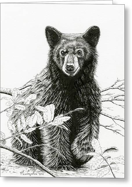 Curious Young Bear Greeting Card