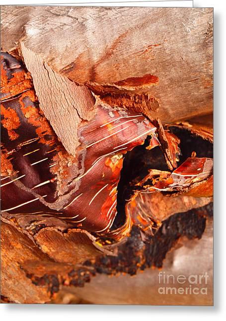 Curled Bark Greeting Card by Tara Turner