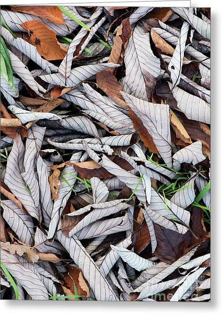 Curled Leaf Litter Greeting Card