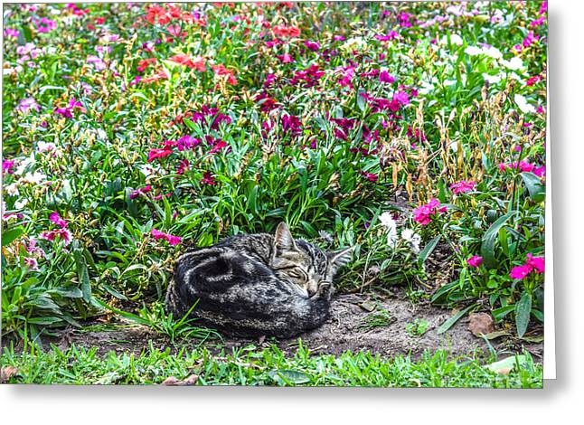 Curled Up Kitten Surrounded By Flowers Greeting Card