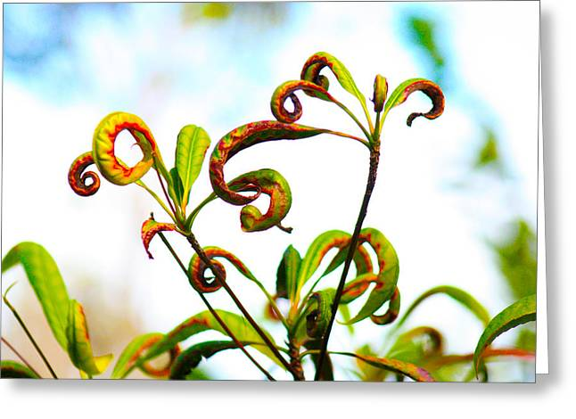 Curly Q's Greeting Card by Nanette Hert