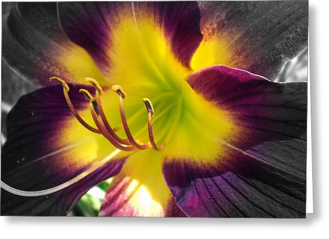 Currant Commotion 5 Lily Greeting Card by Cynthia Daniel