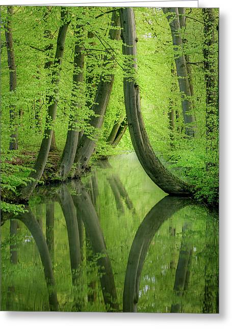 Curved Trees Greeting Card