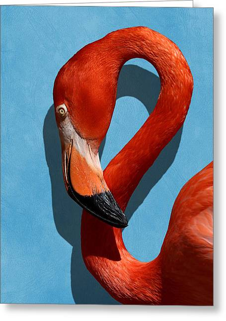 Curves, A Head - A Flamingo Portrait Greeting Card