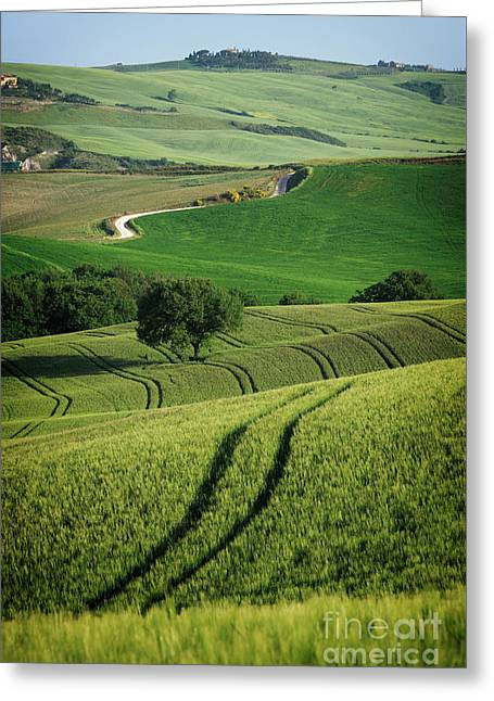 Greeting Card featuring the photograph Curvy Lines In Tuscany by IPics Photography