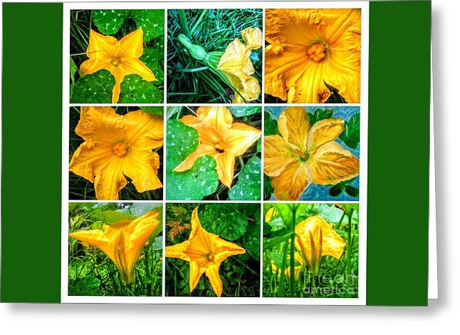 Cushaw Blossom Collage Greeting Card
