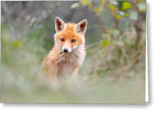 Cute Baby Fox Greeting Card by Roeselien Raimond