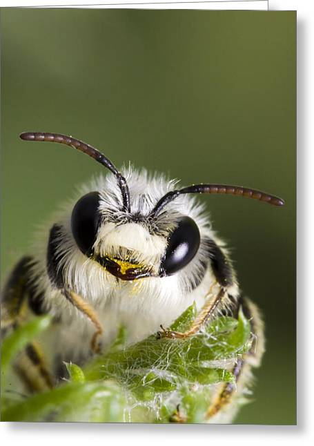 Cute Bee Greeting Card by Andre Goncalves