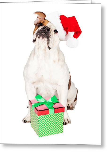 Cute Bulldog With Christmas Present Greeting Card by Susan Schmitz