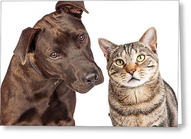 Cute Cat And Dog Closeup Photo Greeting Card
