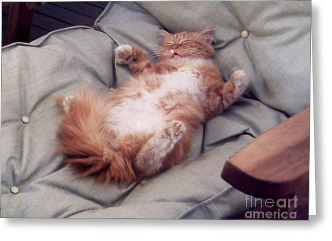 cute cat pictures - Another Rough Day Greeting Card