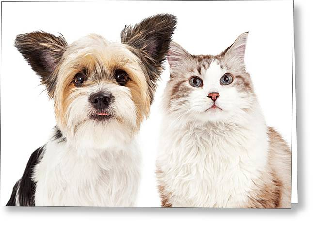 Cute Dog And Cat Closeup Greeting Card by Susan Schmitz