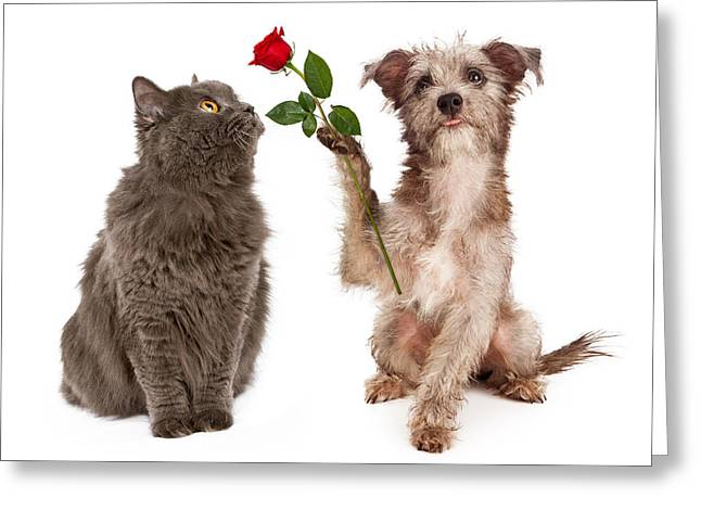 Cute Dog Giving Flower To A Cat Greeting Card by Susan Schmitz