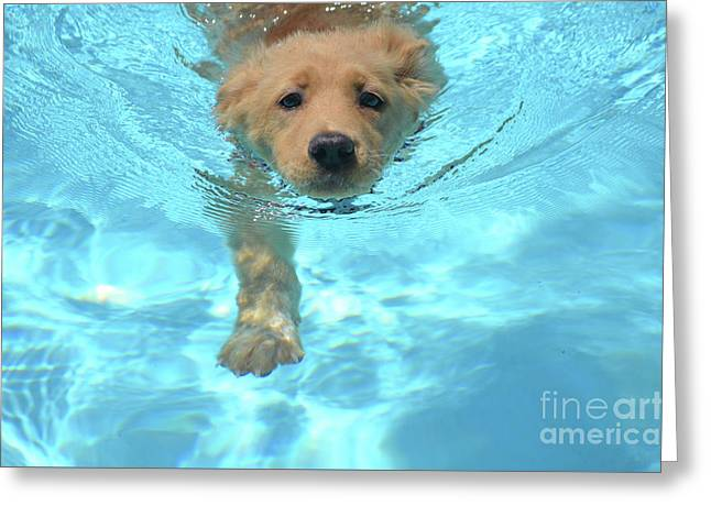 Cute Golden Pup Swimming In A Pool Greeting Card