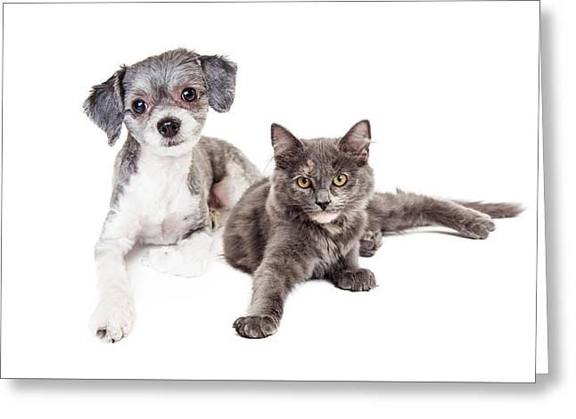 Cute Grey Kitten And Puppy Laying Together Greeting Card