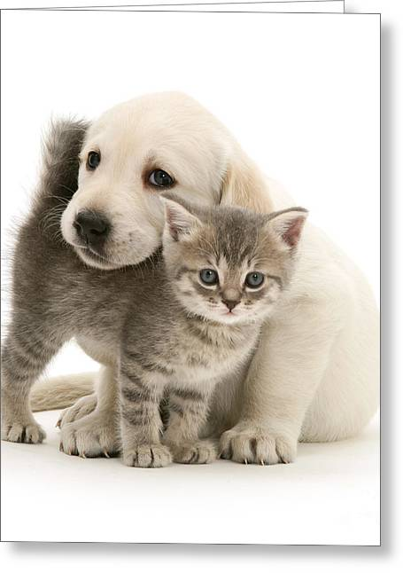 Cute Kitten And Perfect Puppy Greeting Card