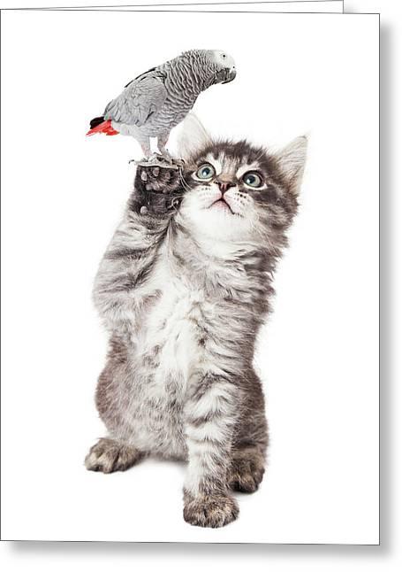 Cute Kitten Holding Parrot Bird Greeting Card by Susan Schmitz