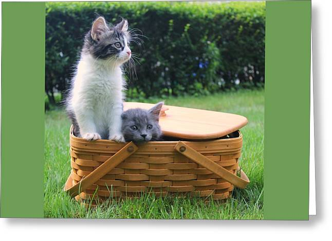 Cute Kittens Escaping From Basket Greeting Card