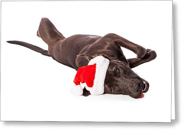 Cute Labrador Dog Laying Wearing Santa Hat  Greeting Card by Susan Schmitz