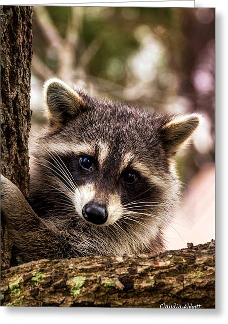 Greeting Card featuring the photograph Cute Little Raccoon  by Claudia Abbott