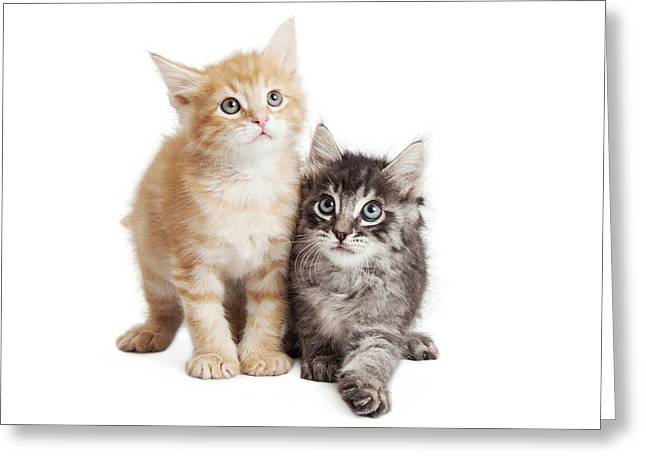 Cute Orange And Black Tabby Kittens Together Greeting Card