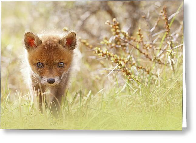 Cute Overload - Baby Fox Kit Greeting Card