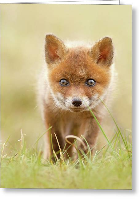 Cute Overload - Red Fox Kit Greeting Card by Roeselien Raimond