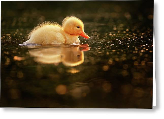 Cute Overload Series - Baby Duck Greeting Card