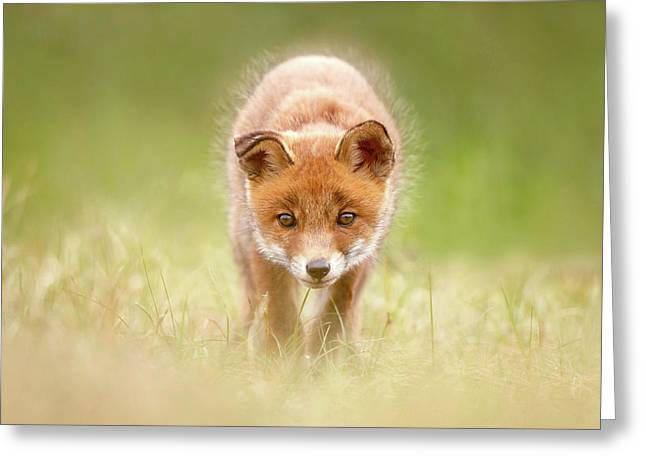 Cute Overload Series - Baby Fox Exploring The World Greeting Card