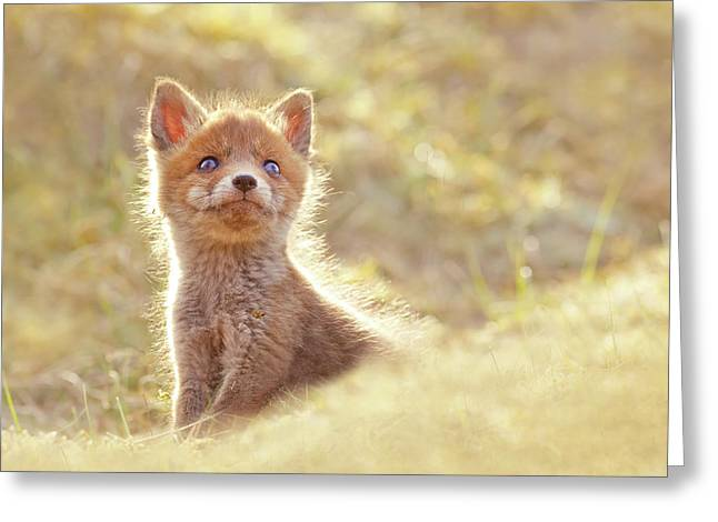 Cute Overload Series - Baby Fox Looking Up Greeting Card