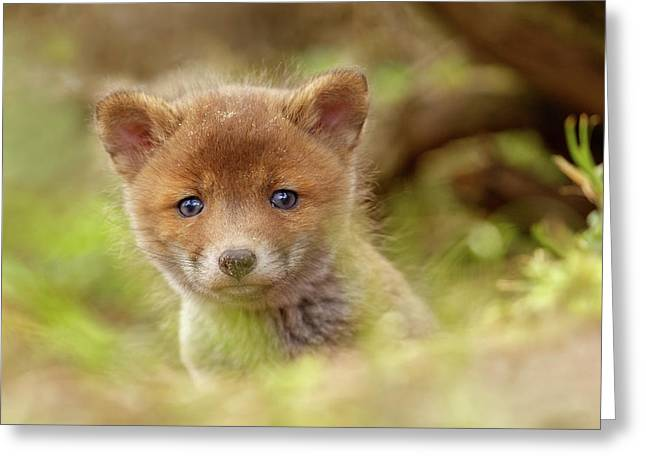 Cute Overload Series - Curious Baby Fox Greeting Card